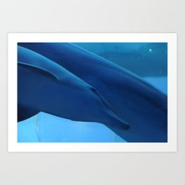 Little dolphin with his mother Art Print
