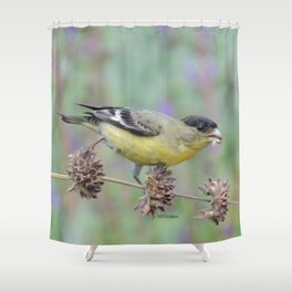 Lesser Goldfinch Snacks on Seeds Shower Curtain