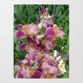 irises / Framed ,Travel Mug. decorative panel  furniture mug,  notSideebook cushion backpack phone c Poster