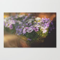 Sunny flowers Canvas Print