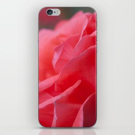 Pink Rose iPhone Skin