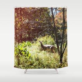 autumn deer. Shower Curtain