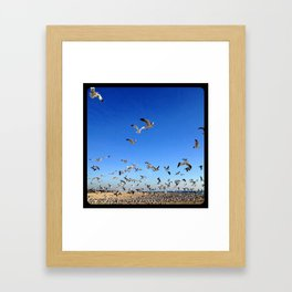 Fly, birds, fly! Framed Art Print