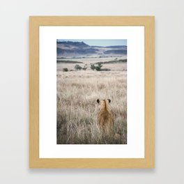Lioness sits and waits for prey Framed Art Print