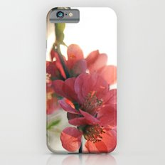 Evening Blush iPhone 6s Slim Case