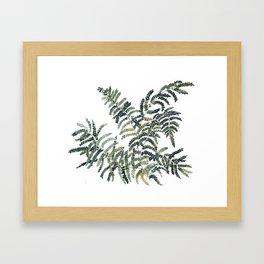 Woodland Fern Botanical Watercolor Illustration Painting Framed Art Print