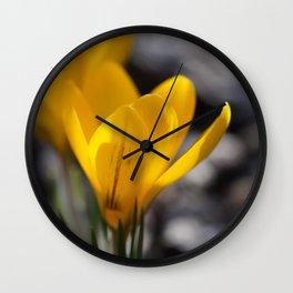 Yellow Crocuses Wall Clock