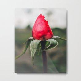Closed Red Rose Metal Print