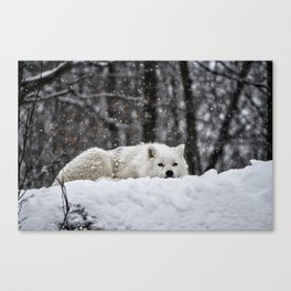 Dreams of warmer weather Canvas Print