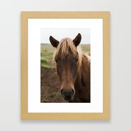 Horse in Iceland - nature photography Framed Art Print