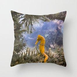 Seahorse Window Throw Pillow