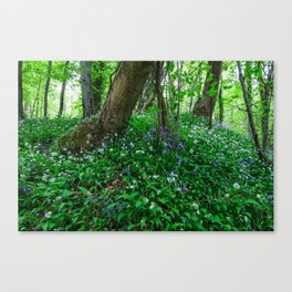 Bluebells and Wild Garlic II Canvas Print