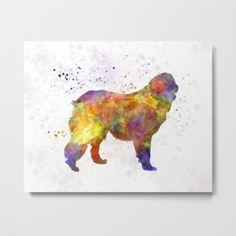 Leonberger in watercolor Metal Print
