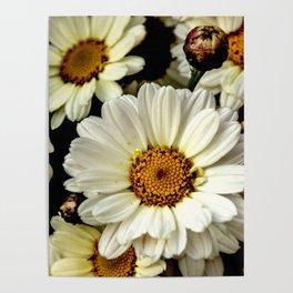 chamomile flower Poster