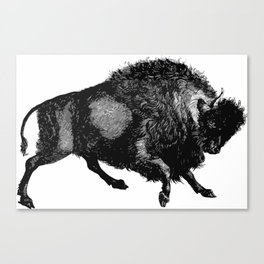 Buffalo Canvas Print