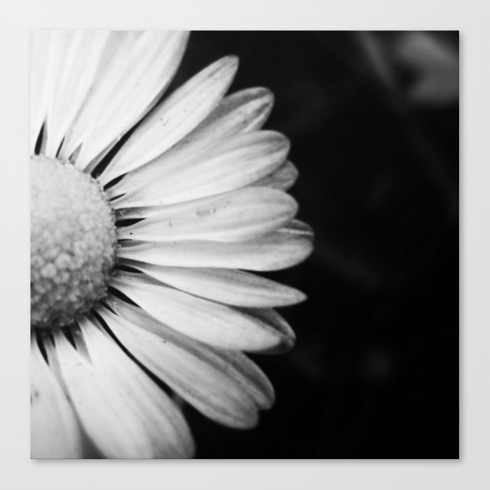 Black and white flower macro photography monochromatic photo canvas print by treelovergirl black and white flower macro photography monochromatic photo canvas print mightylinksfo