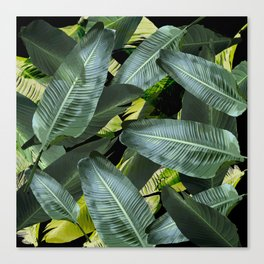 Topical palm leaf, banana leaf, black background, greens, Beach Hawaii decor Canvas Print
