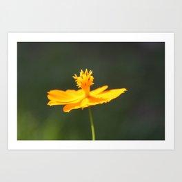 Flower or Sundial? Art Print