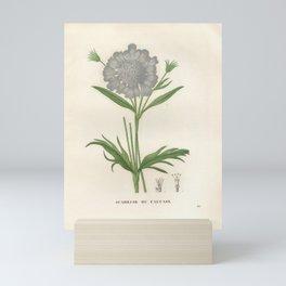 Flower scabiosa caucasica2 Mini Art Print