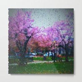 Cherry Blossoms at Stanton Park Metal Print