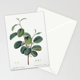 Alpine buckthorn (Rhamnus alpinus) from Traite des Arbres et Arbustes que lon cultive en France en pleine terre (1801-1819) by Stationery Cards