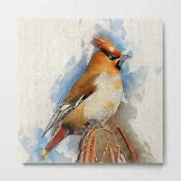 Watercolor Bird - Bohemian waxwing(Bombycilla garrulus) Metal Print