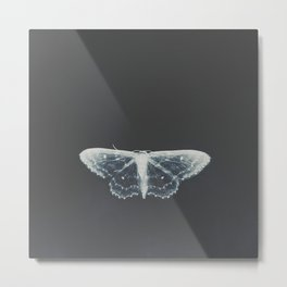 Butterfly on Dark Blue - White transparent Butterfly photography by Ingrid Beddoes Metal Print