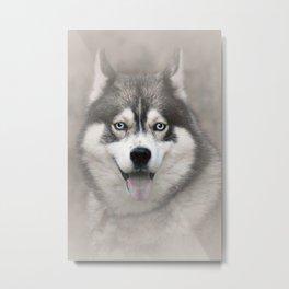 Siberian Husky 2 Metal Print