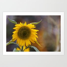 Sunflower in the field Art Print
