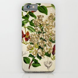 Flower eugenia luma aeschynanthus tricolor9 iPhone Case