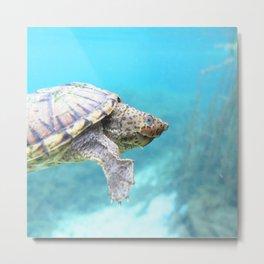 Watercolor Turtle, Loggerhead Musk Turtle 01, Rainbow Springs, Florida Metal Print