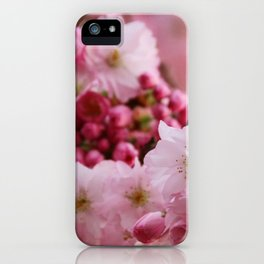 Japanese cherry blossoms in spring iPhone Case