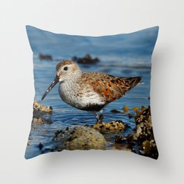 Bird on the Beach / A Solitary Dunlin Throw Pillow