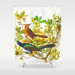 Boat tailed Grackle John James Audubon Vintage Scientific Birds of America Illustration Shower Curtain