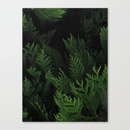 Secrets Canvas Print