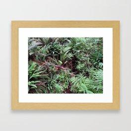 Redwood Rainforest Ferns Framed Art Print