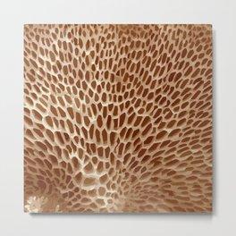 Sponge Mushroom Background - 03 Brown Metal Print