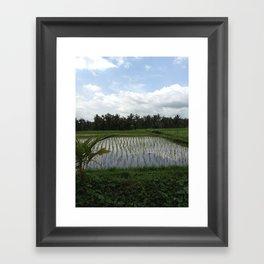 Sunrice Framed Art Print