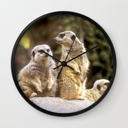 Act Natural Meerkats Wall Clock