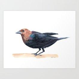 Watercolor Birds: Brown-headed Cowbird Art Print
