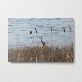 Grey Heron Donegal Ireland Metal Print