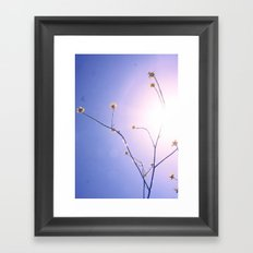 Delicate Things Framed Art Print
