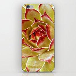 Suculenta iPhone Skin