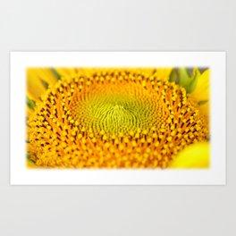 Little bet of sun flower..... Art Print