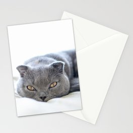 Beautiful Scottish Fold cat curled up on bed Stationery Cards