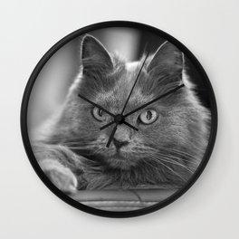 Fluffy Grey Cat Wall Clock