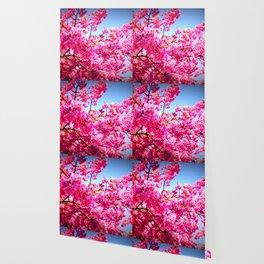 pink FLowers blue sky Wallpaper