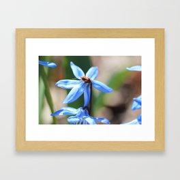 a bug in grandmas garden Framed Art Print
