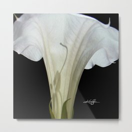 Moon Flower by kathy Morton Stanion Metal Print