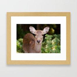 Nara Park Deer Framed Art Print